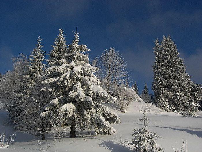 Image Traversée de la Haute Forêt Noire