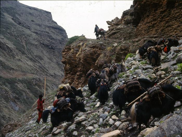 Image Trek au Dolpo... La route du sel