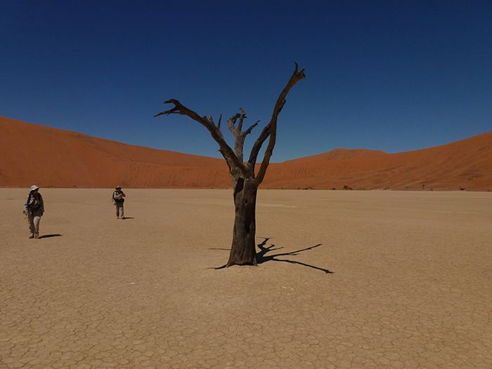 Voyage avec des animaux : Les incontournables de Namibie