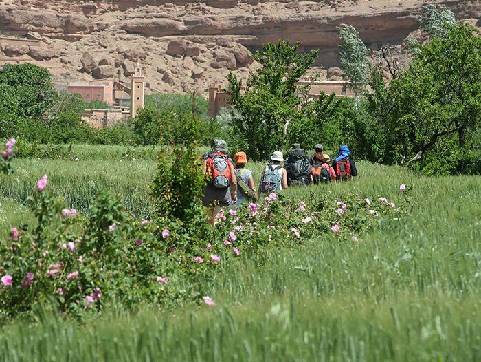 Voyage à pied : Vallée des roses et kasbahs du Grand Sud