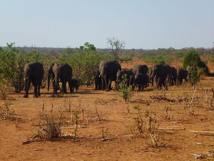 Voyage à pied : Namibie, Botswana et chutes Victoria
