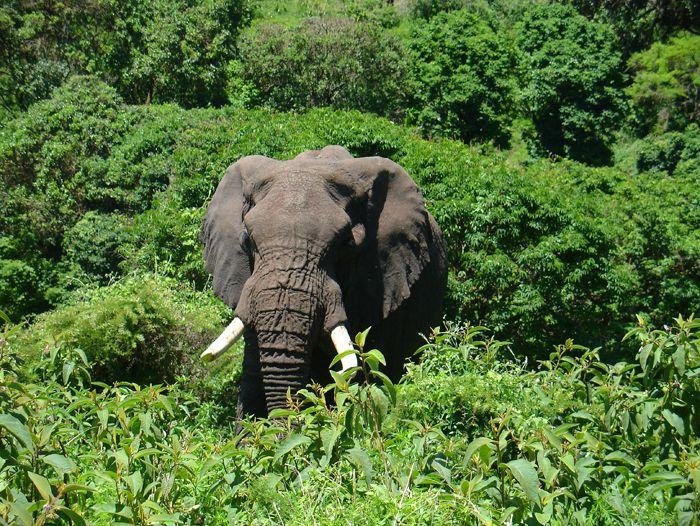 Voyage à pied : Safari en Tanzanie, les plus beaux parcs animaliers
