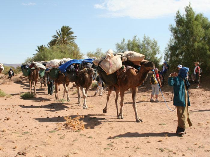 Voyage à pied : Essaouira, randonnée chamelière sur la côte Atlantique