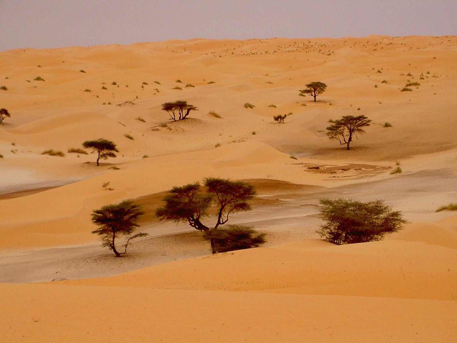 Voyage à pied : De Chinguetti à Terjit, oasis de l\'Adrar
