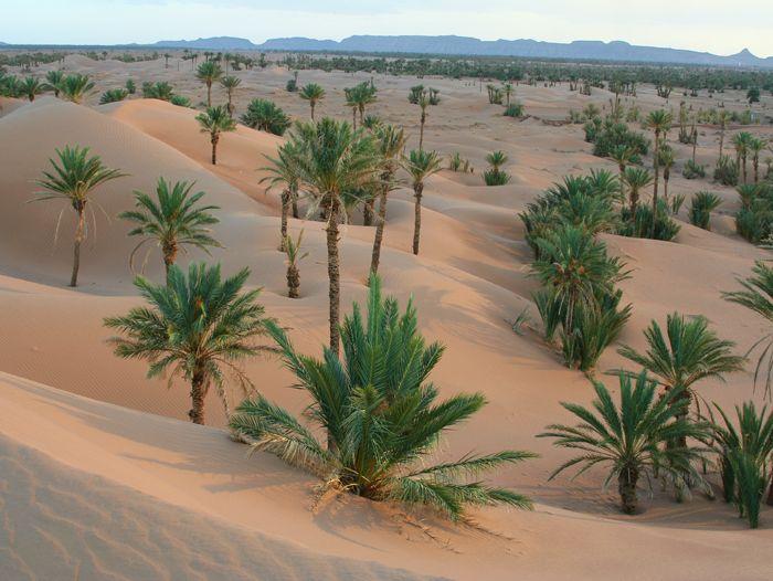 Voyage à pied : Vallée des roses et vallée du Draa, les incontournables du grand sud marocain